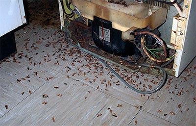 comment exterminer les cafards traiter les causes d infestation. Black Bedroom Furniture Sets. Home Design Ideas