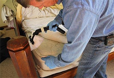 Comment stopper les punaises de lit emp cher une invasion - Punaise de lit traitement vapeur ...